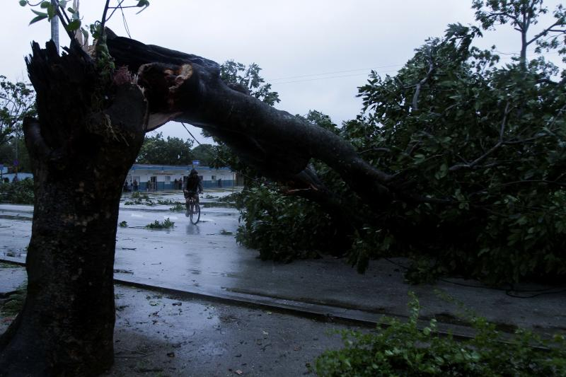 A man rides his bicycle under the arc made by a tree knocked down by Hurricane Sandy in Gibara, Cuba, Thursday, Oct. 25, 2012. Hurricane Sandy blasted across eastern Cuba on Thursday as a potent Category 2 storm and headed for the Bahamas after causing at least two deaths in the Caribbean. (AP Photo/Franklin Reyes)