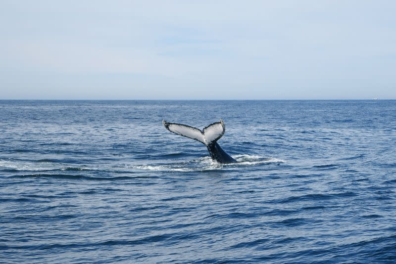 Recently devastated by bushfires, migrating whales help revive some Australian towns