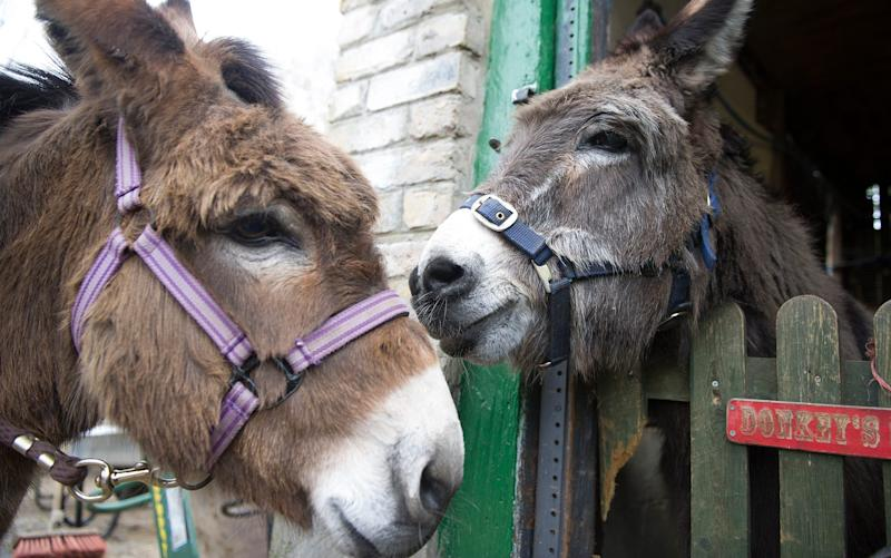 Clover (L) and her companion Larry (R) at Hackney City Farm, east London - Credit: Eddie Mulholland/The Telegraph