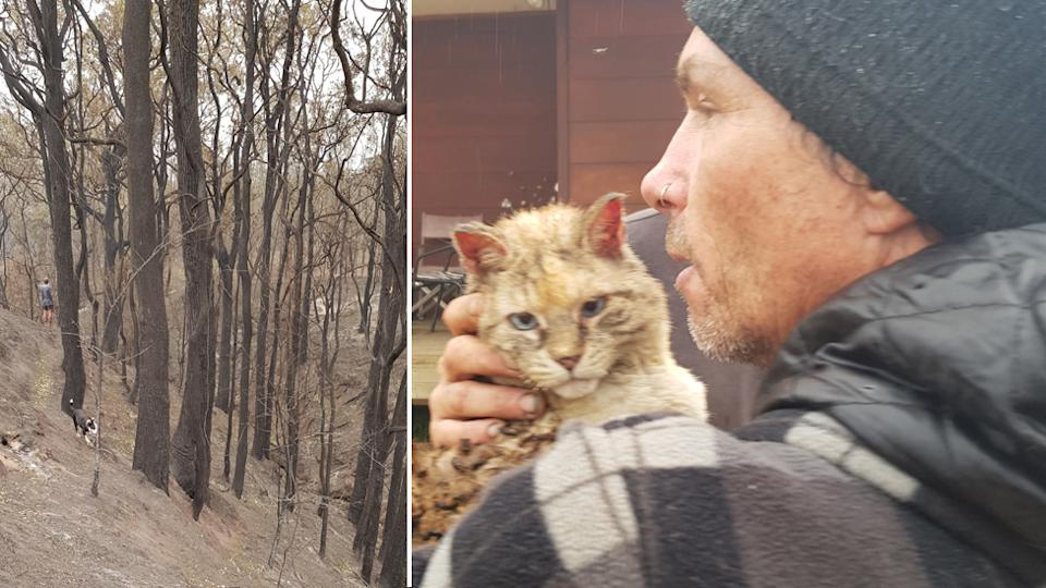 Angel the cat ran away during the bushfires and retuned 7 nights laster barely injured.