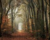<p>'When I am in the woods, I feel like I am walking in a painting.' (Masters of Landscape Photography) </p>