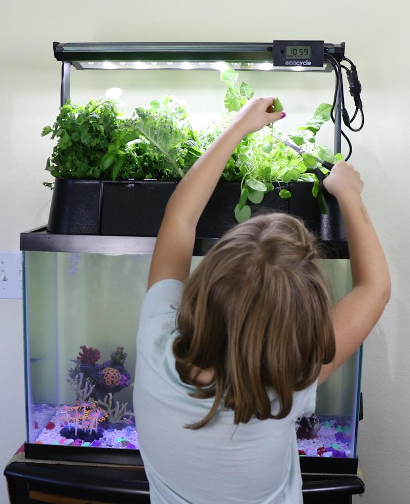 A child tends to an Ecolife tank in a school classroom. (Ecolife)