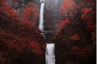 """<p><strong>Where to go:</strong> Brilliant red and scarlet leaves frame the uber-popular Multnomah Falls in the Columbia River Gorge National Scenic Area (30 minutes outside Portland).</p><p><strong>When to go:</strong> Late October or Early November</p><p><a class=""""link rapid-noclick-resp"""" href=""""https://go.redirectingat.com?id=74968X1596630&url=https%3A%2F%2Fwww.tripadvisor.com%2FHotels-g52024-Portland_Oregon-Hotels.html&sref=https%3A%2F%2Fwww.redbookmag.com%2Flife%2Fg34045856%2Ffall-colors%2F"""" rel=""""nofollow noopener"""" target=""""_blank"""" data-ylk=""""slk:FIND A HOTEL"""">FIND A HOTEL</a></p>"""