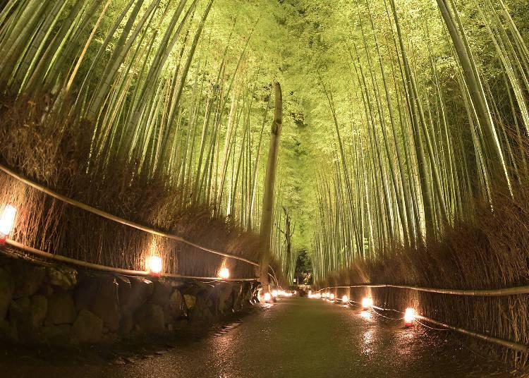A glimpse of the bamboo forest