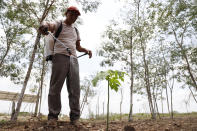 A man sprays a seedling at a Planting Life site, a jobs and reforestation program promoted by Mexican President Andres Manuel Lopez Obrador, in Kopoma, Yucatan state, Mexico, Thursday, April 22, 2021. President Lopez Obrador is making a strong push for his oft-questioned tree-planting program, trying to get the United States to help fund expansion of the program into Central America as a way to stem migration. (AP Photo/Martin Zetina)
