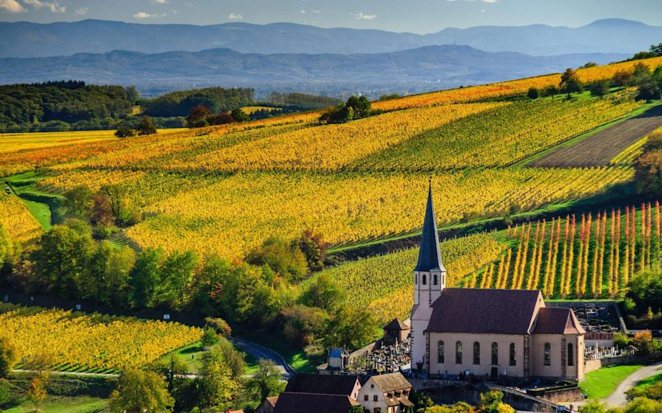 Vineyards in the Alsace - Getty