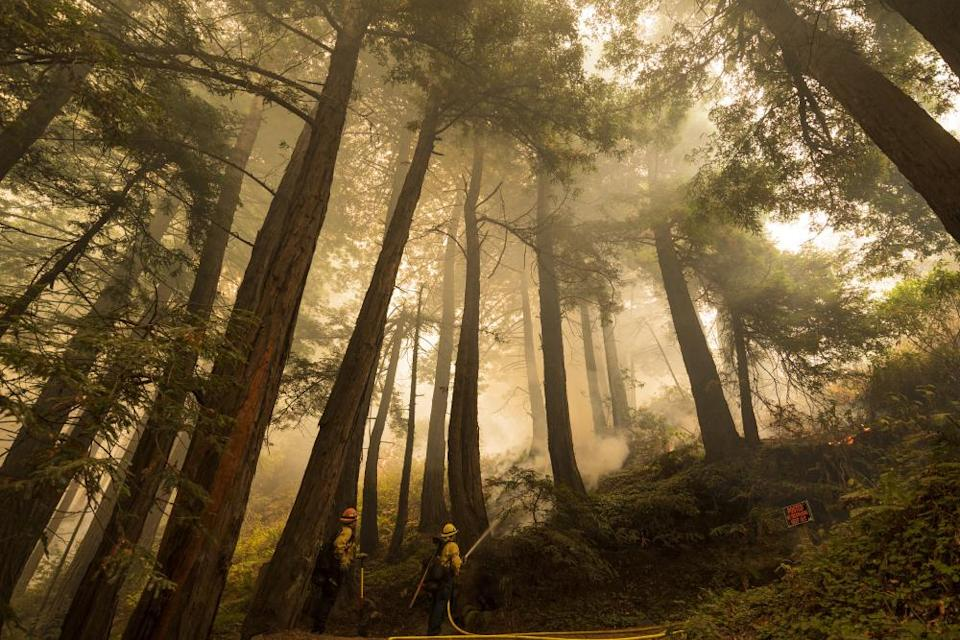 A firefighter shoots an incendiary device during a back burn to help control the Dolan fire at Limekiln state park in Big Sur on 11 September.