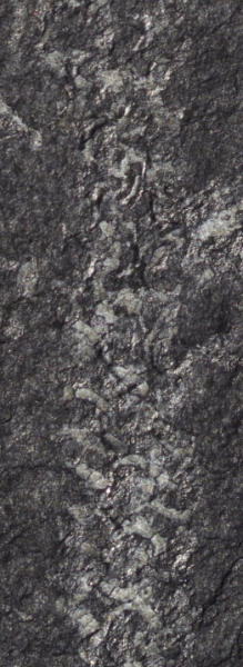 A detailed look at the graptolite fossil.