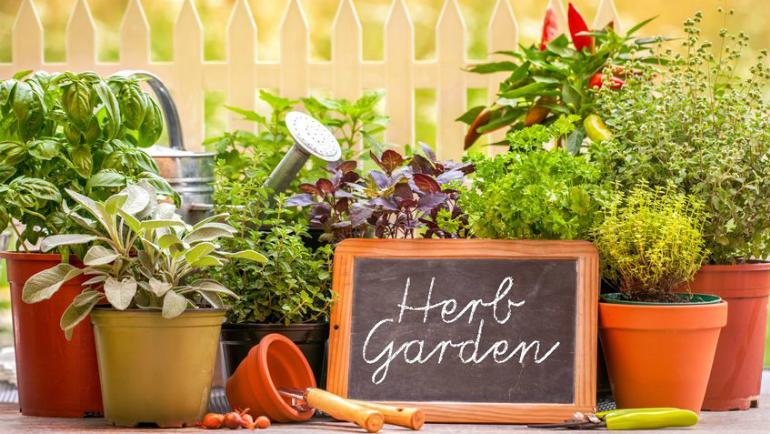7 Herbs That You Can Easily Grow at Home In Malaysia