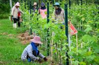 The long term future of Thailand's GranMonte wines is clouded by the kingdom's heavily restrictive booze laws