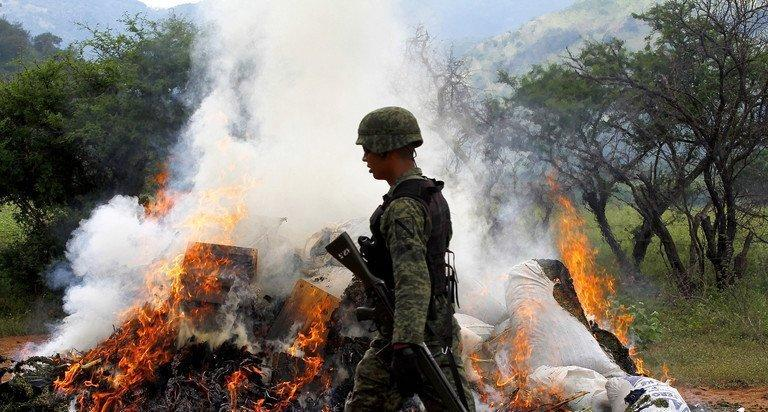 Mexican soldiers burn marijuana plants on September 27, 2012. The leader of the Gulf cartel was transferred Sunday to Mexico City for questioning after his capture near the northern border with the United States