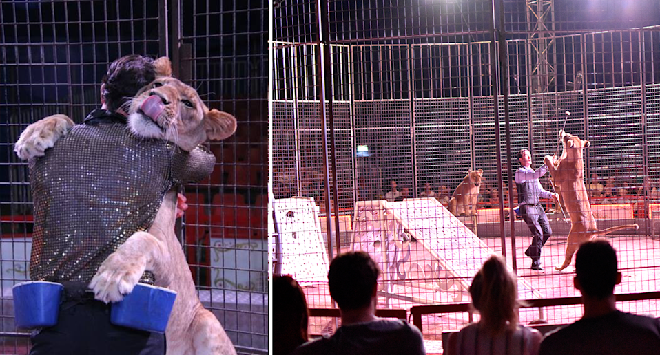 A Stardust Circus trainer working with lions before a crowd. Source: Stardust Circus