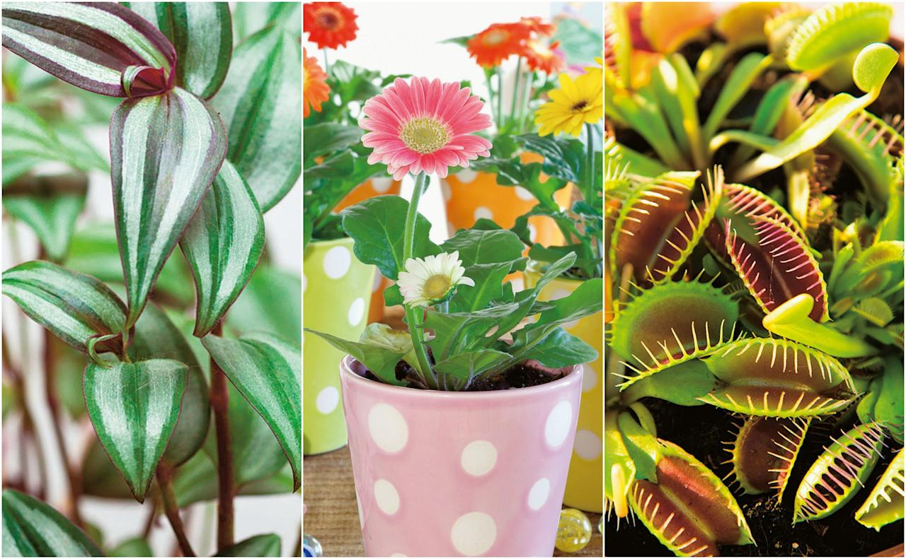 """<p><strong><a href=""""https://www.housebeautiful.com/uk/garden/plants/a177/houseplant-mistakes/"""" target=""""_blank"""">Houseplants</a> shouldn't just be limited to the living room. When it comes to <a href=""""https://www.housebeautiful.com/uk/decorate/bedroom/a2108/kids-bedroom-ideas-furniture/"""" target=""""_blank"""">kids' bedrooms</a>, choose plants that 'have something quirky about them, even verging on the macabre,' Ian Drummond and Kara O'Reilly suggest in their new book, At Home With Plants. 'A good approach is to choose plants that can be dotted in among their books and bits and pieces.'</strong></p><p>And of course, 'choose varieties that can take a fair bit of neglect,' they advise. With this in mind, take a look at 12 plants ideal for children's spaces – bedroom, playroom or study room – in this extract from <a href=""""https://www.amazon.co.uk/At-Home-Plants-Ian-Drummond/dp/1784721948?tag=hearstuk-yahoo-21&ascsubtag=%5Bartid%7C2060.g.151%5Bsrc%7Cyahoo-uk"""" target=""""_blank"""">At Home With Plants</a>.</p>"""