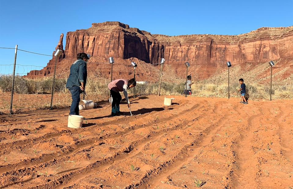 Cynthia Wilson's family grows rows of corn, beans and melons outside of their home in Monument Valley, Utah, on the Navajo Nation. (Cynthia Wilson)