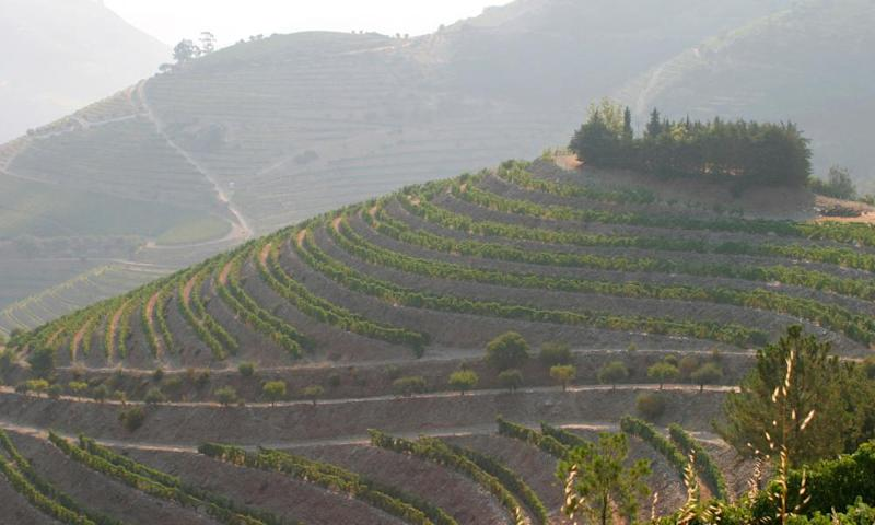 Turn your attention to Portuguese wines