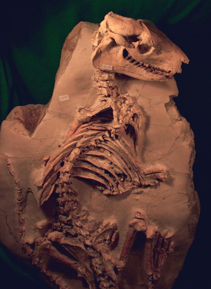China Cretaceous Era: Scientists Solve Mystery Behind Mass Communal Graves of Animals