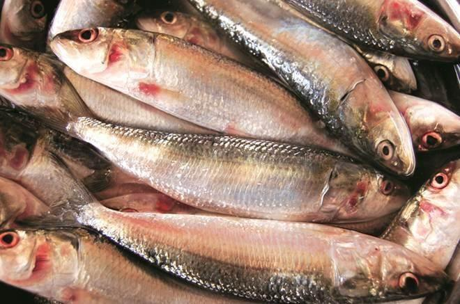 The catch of sardine dropped to 1.55 lakh tonne all over India from 3.37 lakh tonne in 2017, a CMFRI source said. (Representational image)