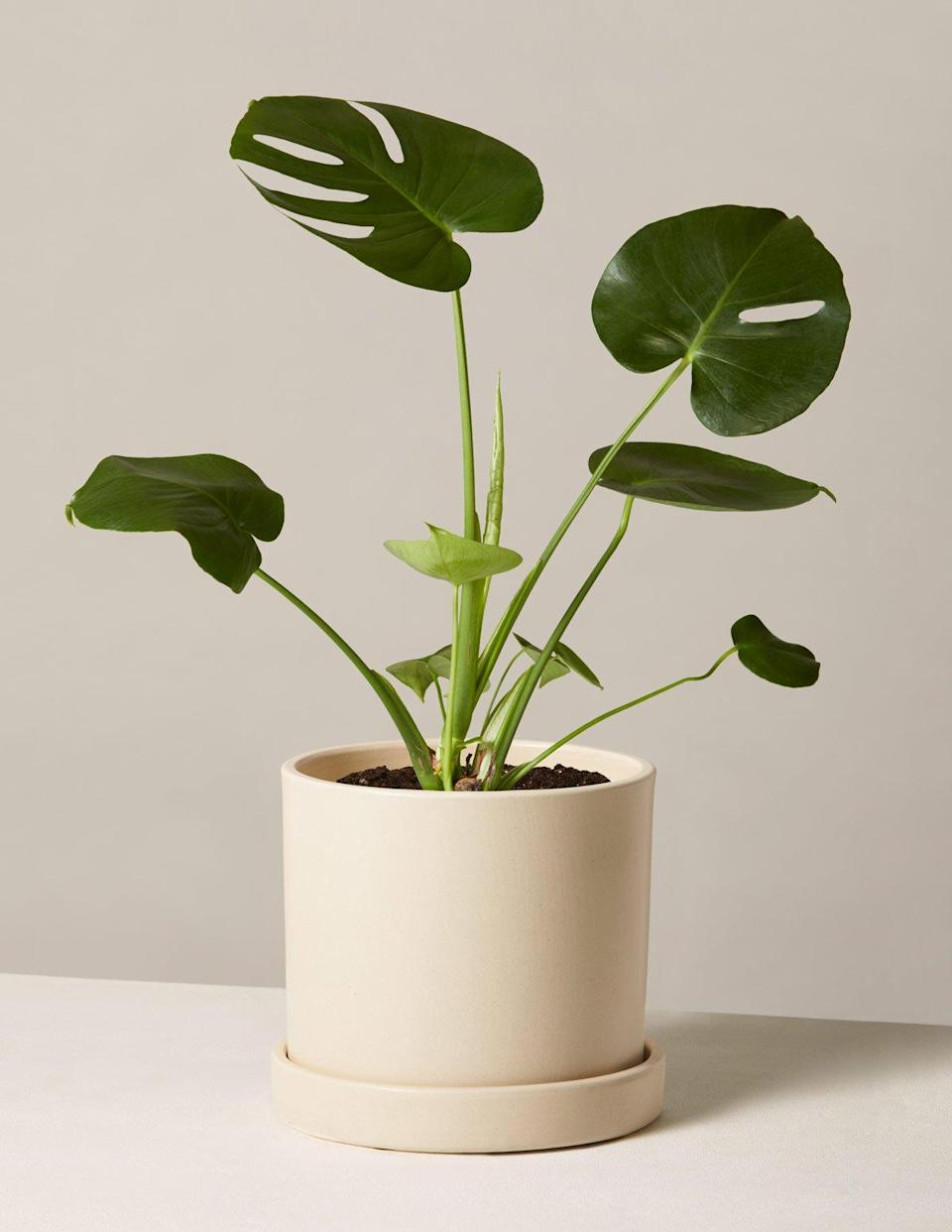 <p>In these WFH times, a plant is a perfect gift for adding much-needed zen vibes to any living/office space.</p>