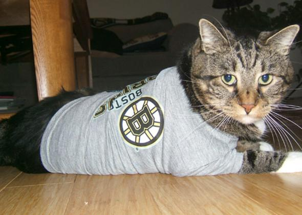 "<div class=""caption-credit"">Photo by: Vetstreet.com</div><div class=""caption-title""></div>Five-year-old Bonzo supports the Boston Bruins by wearing a T-shirt from his favorite team."