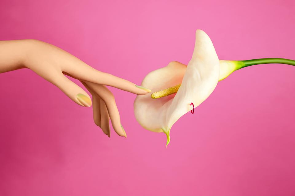 Hand reaching out to touch stamen of calla lily on pink background