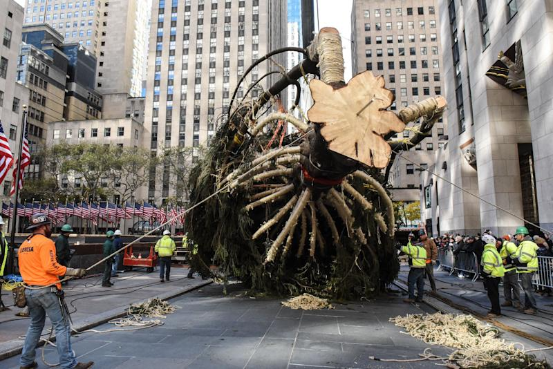 The tree will remain on display on the plaza until Jan. 7.