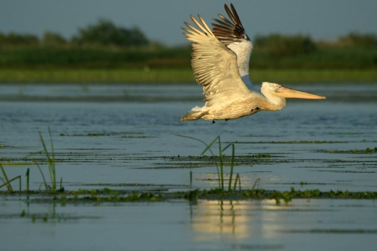Unesco's World Heritage list, this natural paradise spread across 58,000 square kilometres hosts over 300 species of bird and 45 freshwater fish species (AFP Photo/Daniel MIHAILESCU)