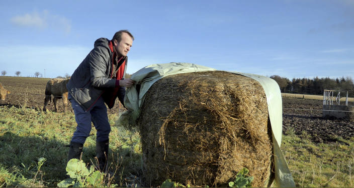 "Johnnie Balfour, the managing director of Balbirnie farm in Cupar, Scotland uncovers hay on Tuesday Dec. 3, 2019. Balfour, who family has operated Balbirnie Farm since 1642, is tired of all the back and forth over independence. He remembers that voters were told ahead of the 2014 vote that this was a ""once in a generation"" decision _ he doesn't want to revisit it just five years later. (AP Photo/Renee Graham)"