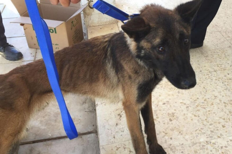 Report Says US Security Dogs Sent to Jordan Die from Poor Care