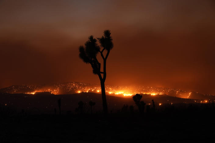 The Bobcat Fire burns in the distance beyond a Joshua tree Saturday, Sept. 19, 2020, in Juniper Hills, Calif. (AP Photo/Marcio Jose Sanchez)