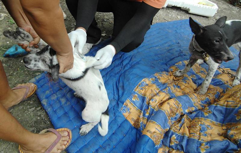 File photo taken in October 2010 shows government health workers vaccinating a dog in Denpasar during a province-wide anti-rabies campaign (AFP Photo/Sonny Tumbelaka)