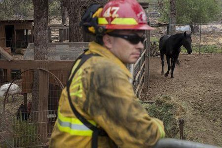 A firefighter watches over animals at a property evacuated and partially burnt by the Valley Fire in Hidden Valley Lake, California September 15, 2015. REUTERS/David Ryder