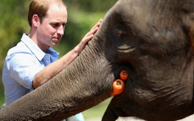 The Duke of Cambridge has been a high profile campaigner on the issue - Getty Images AsiaPac