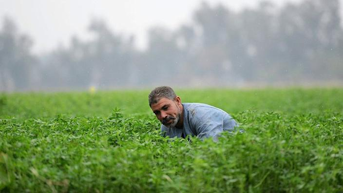 Egypt says the waters of the Nile are vital for its agricultural sector