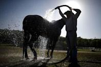A man washes a horse at the International Gay Rodeo Association's Rodeo In the Rock in Little Rock, Arkansas, United States April 25, 2015. REUTERS/Lucy Nicholson
