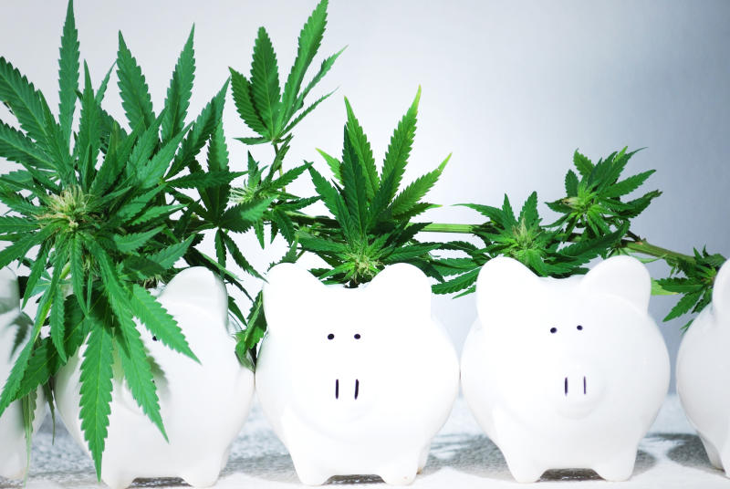 Cannabis plants growing out of piggy bank-shaped pots, with the size of the plants decreasing from left to right.