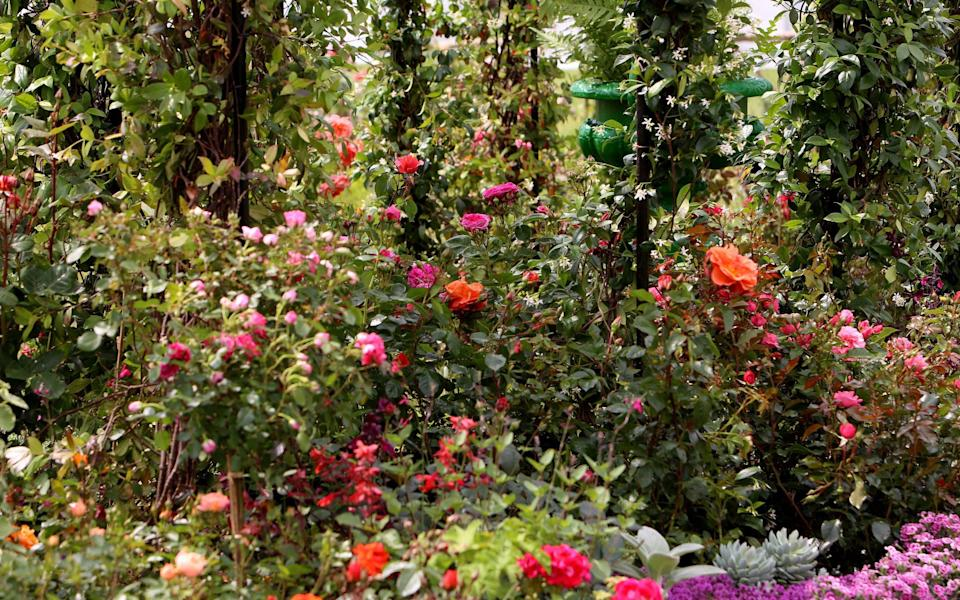 Florist Nikki Tibbles is creating a dreamy and highly scented space for flower lovers with her Enchanting Rose Tea garden, pictured - Clara Molden