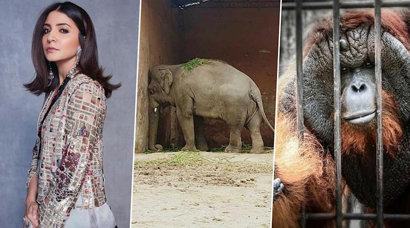 Anushka Sharma's Latest Plea Highlights the Plight of the Voiceless Caged Animals Who Have Been Quarantined Forever (View Post)