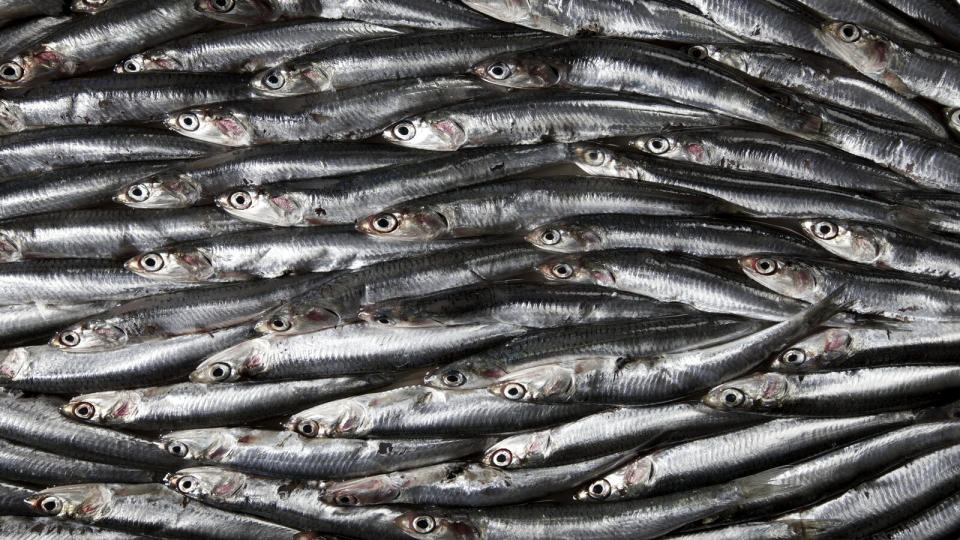 sardines superfoods for weight loss