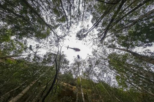 A firefighter rappels into a gorge as a crew tries to save pre-historic Wollemi Pines in the Blue Mountains