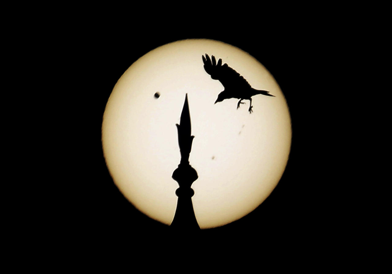A bird comes into land atop one of the domes of the landmark Taj Mahal as Venus, top left, begins to pass in front of the sun, as visible from Agra, India, Wednesday, June 6, 2012. People around the world turned their attention to the daytime sky on Tuesday and early Wednesday in Asia to make sure they caught the rare sight of the transit of Venus. (AP Photo/Kevin Frayer)