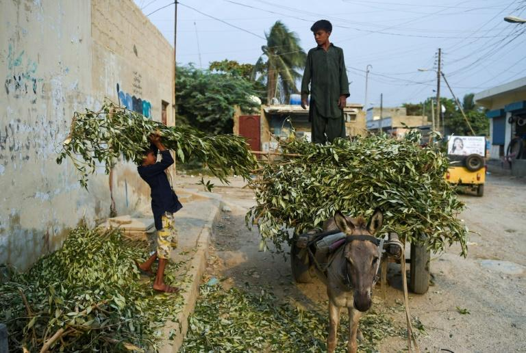 The mangroves are considered an important component of Karachi's environment, which has suffered decades of high pollution and neglect