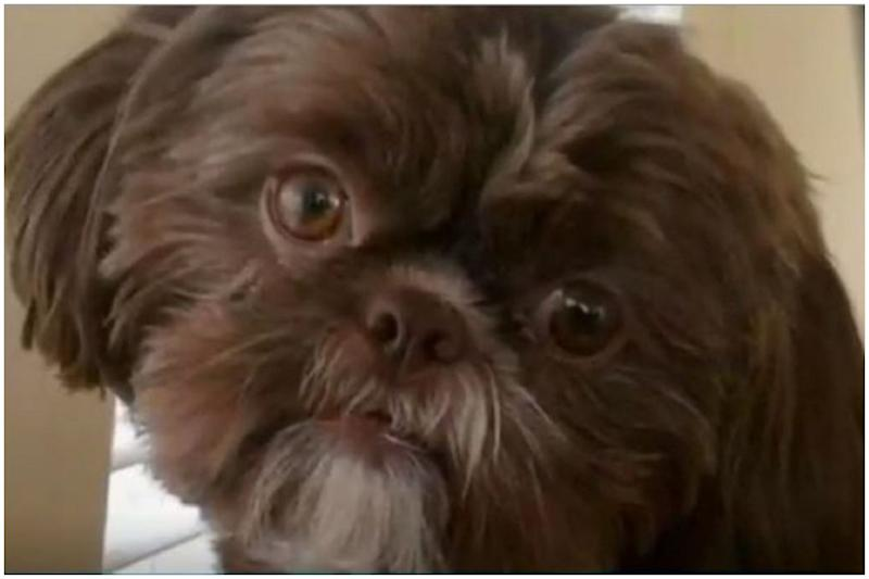 Outrage After Healthy Dog Euthanized as Deceased Owner Wanted to Get Buried With it in US