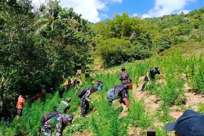 Drone helps cops detect 70,000 weed in Balamban