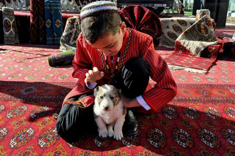 Alabai shepherd dogs are bred not just as pets but as working dogs in Turkmenistan