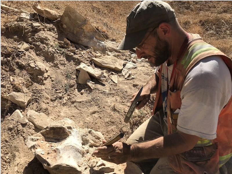 Russell Shapiro, professor of paleontology at CSU Chico, prepares a large whale vertebrae encased by a stone block found on a private road in Simi Valley following the Ridgecrest earthquakes in July. Shapiro says the fossil is about 15 million years old.