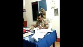 No monkey business: This police officer and his ape friend are both working very hard