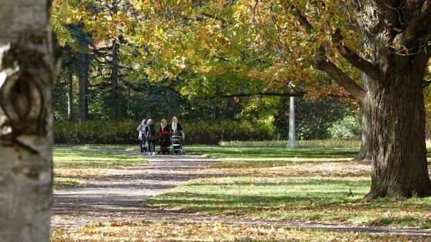 A group of women take an autumn stroll with their babies in Ottawa. (Francis Ferland/CBC - image credit)
