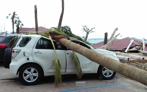 A palm tree collapses onto a car in Florida