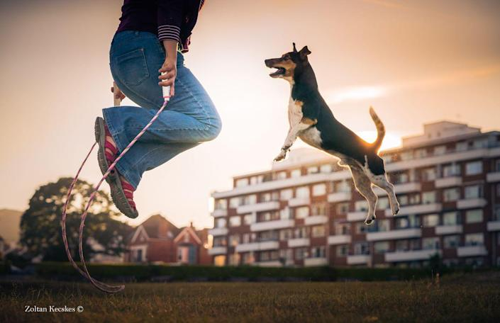 <p>For the second place in this category, Rebel the Jack Russell Cross, joins in with a game of skipping. </p>