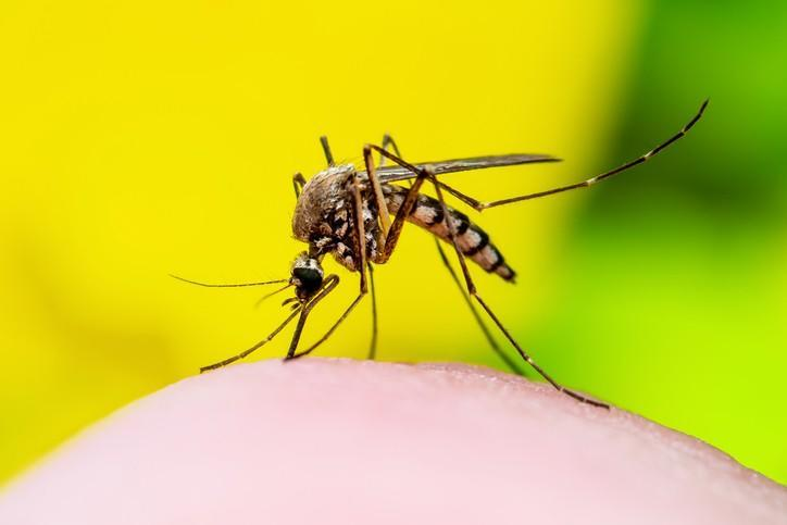 Research reveals mosquito protection secrets